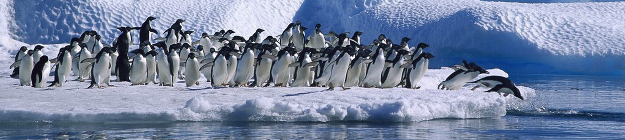 Antartica-penguins