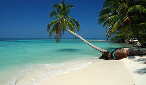 Belize-palmtree-beach