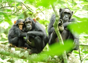 Uganda - Kibale Forest National Park